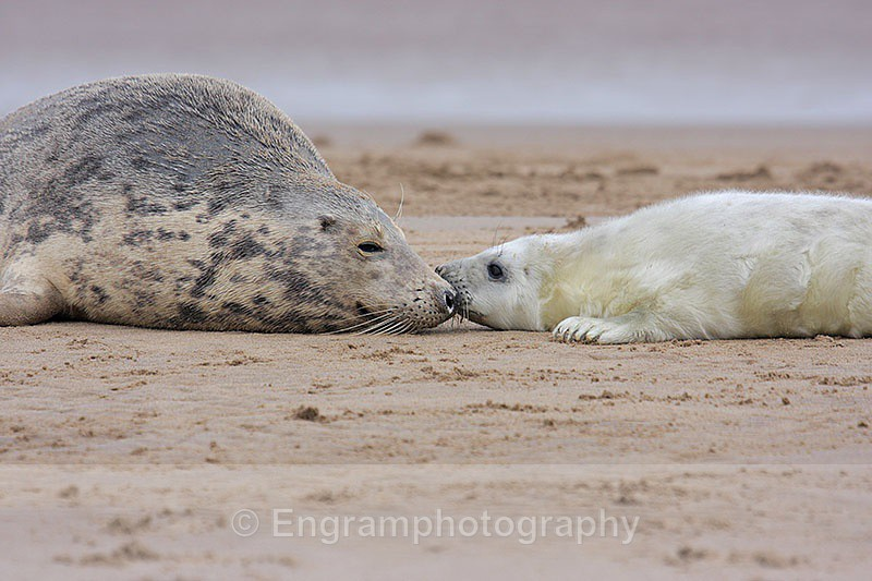 Motherlove - Seals