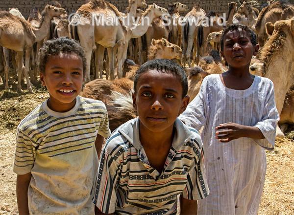 Camel boys - Exhibition acceptances