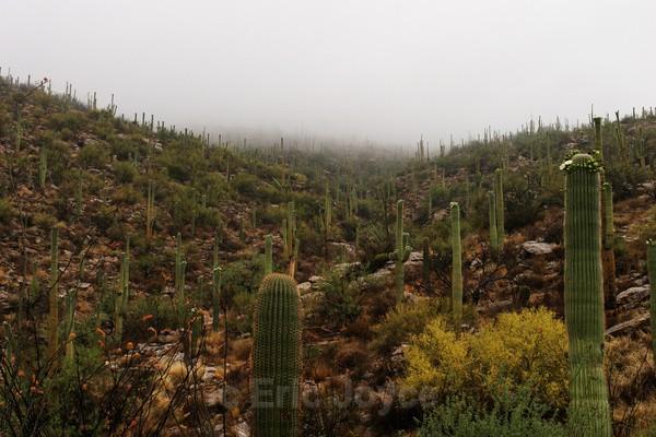 Sky Island - Tuscon, Arizona