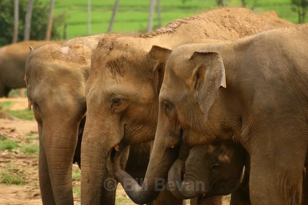 Elephant Conversation - Elephant