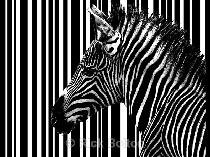 Barcode - Black and white images