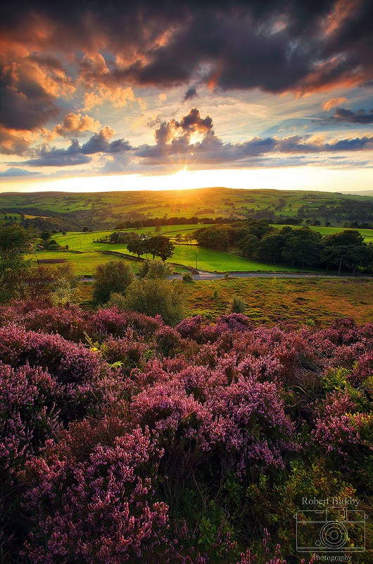 In Full Bloom - Calderdale Landscapes