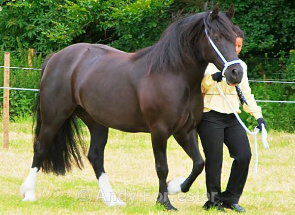 - Horses
