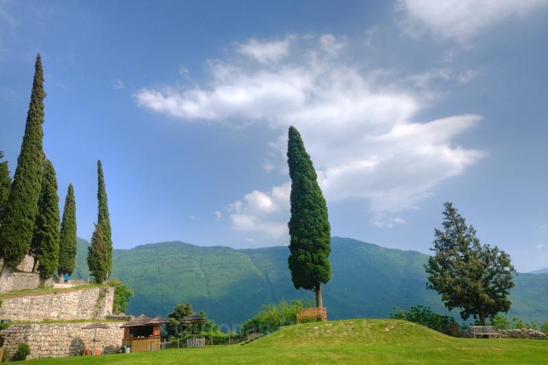 Cypress Tree - European Landscapes