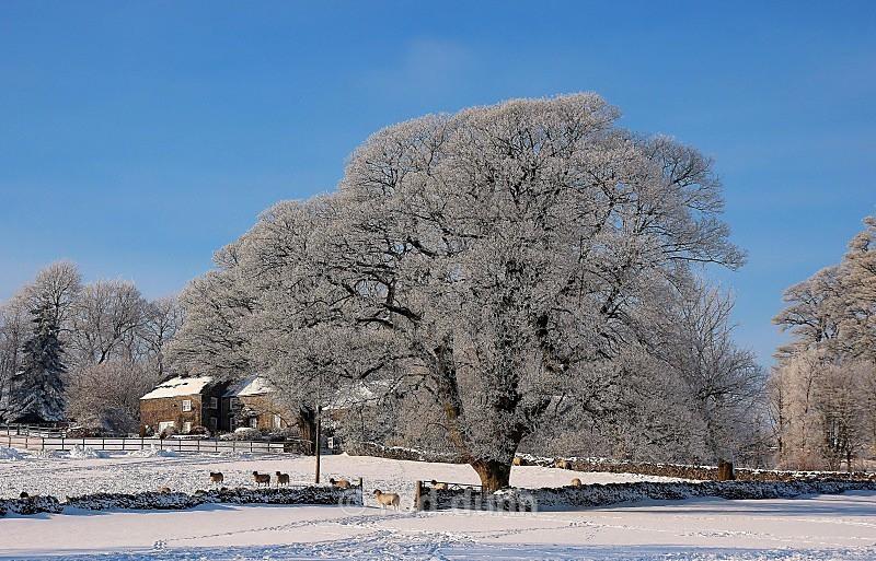Farm in winter - Peak District