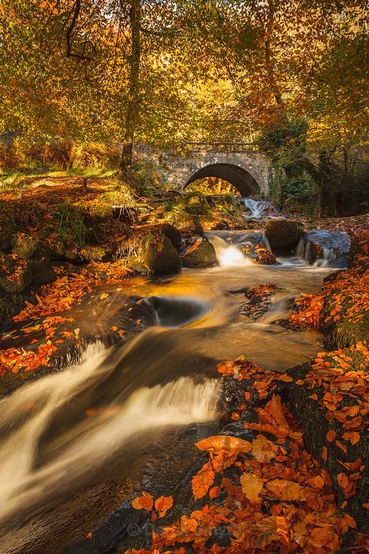 Autumn Gold By The Cloughleagh Bridge