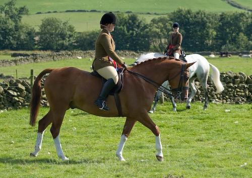 152 - Moniaive Horse Show 2008