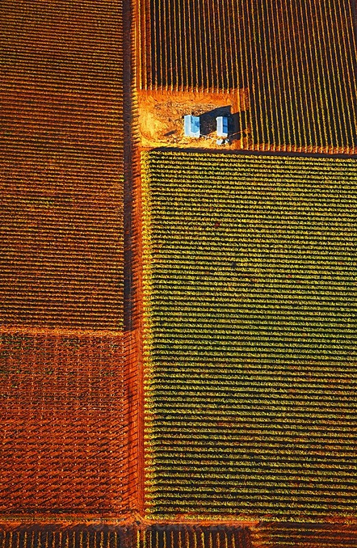 Autumn Vines-3865 from a Hot-Air Balloon. - AERIAL PHOTOS
