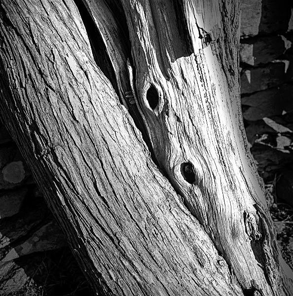 Bark 59 - Bark 3
