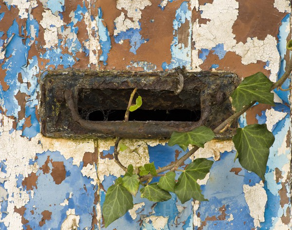 Old Letterbox & Ivy.