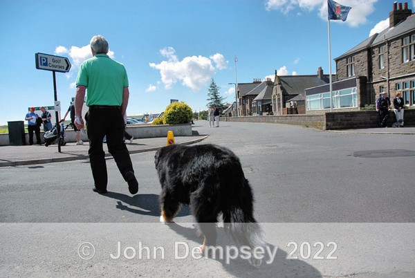 Where to now - Walking the Dog