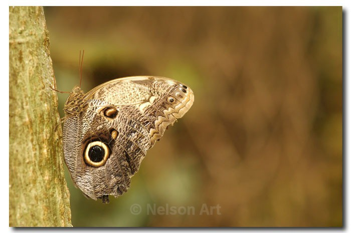 Butterfly - Nature