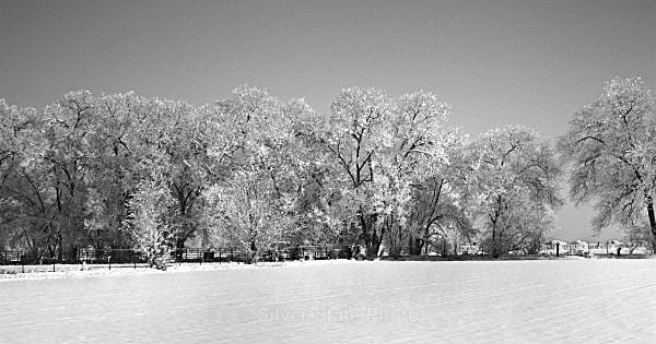 Pogonip Winter - Nevada (mostly) Landscapes