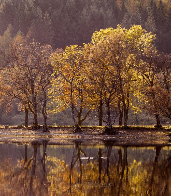 Loch Lubnaig autumn trees - Stirling and the Trossachs