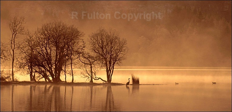 Quiet Morning - Landscapes