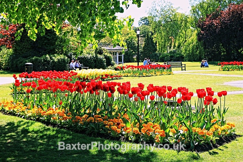 Tulip Daze - The Valley Gardens (Harrogate)
