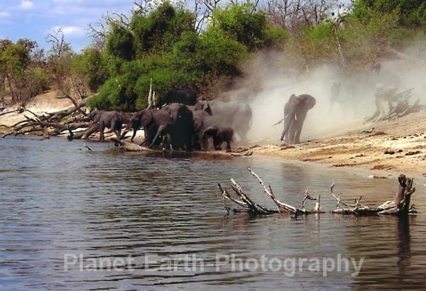 Herd Of Dust - Around The World