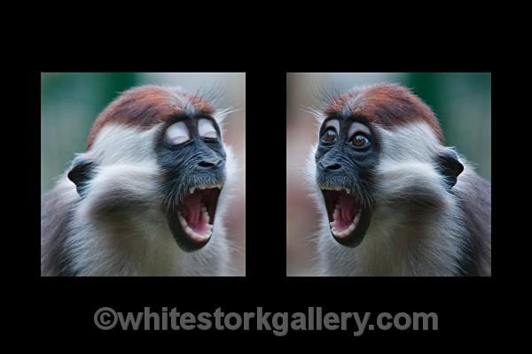 Monkey Talk ! - Wildlife and Animals