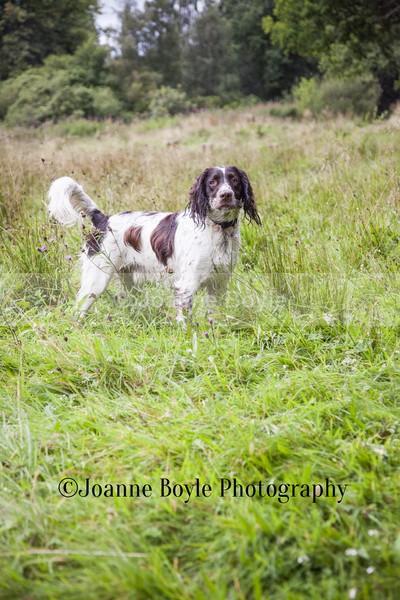 - Dog Portrait Photography