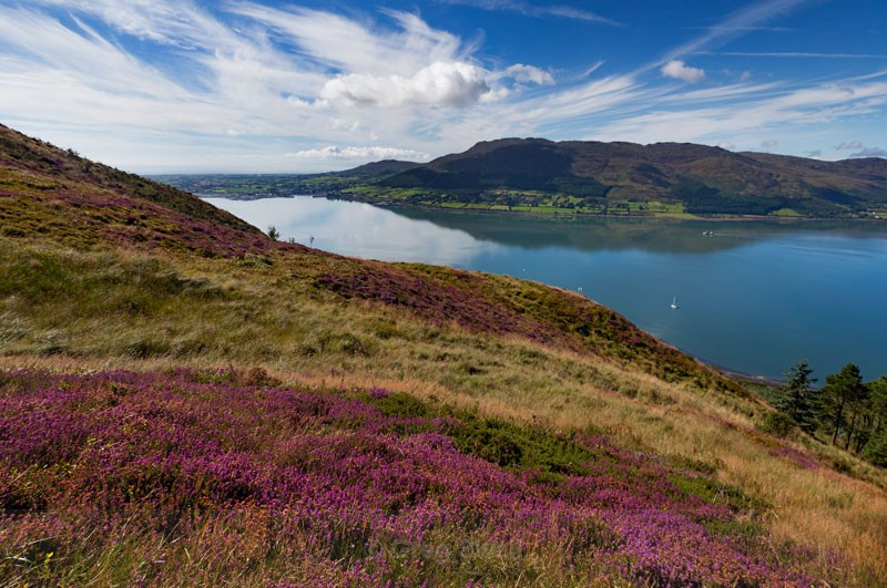Carlingford Lough - At the Foot of the Mountain