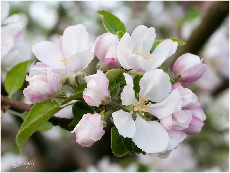20130601-IMG_5113 - Flora