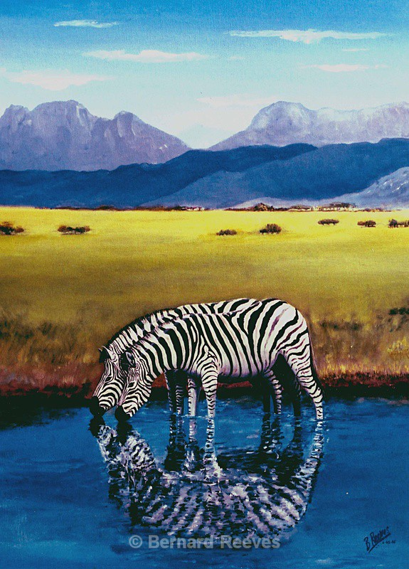 Zebras at Penwarn (South Africa) - Miscellaneous