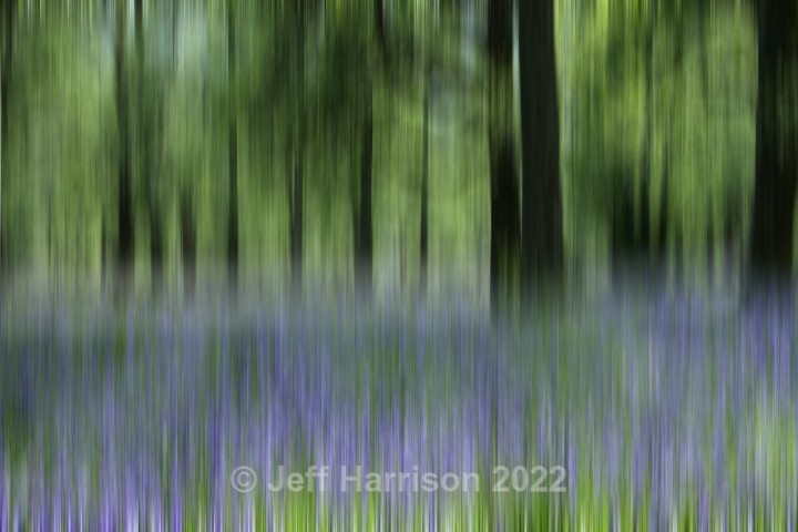 Bluebell woods in the Spring (image Abstract 09) - Abstract