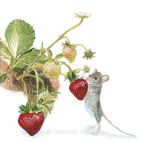 Strawberry theif - British Wildlife