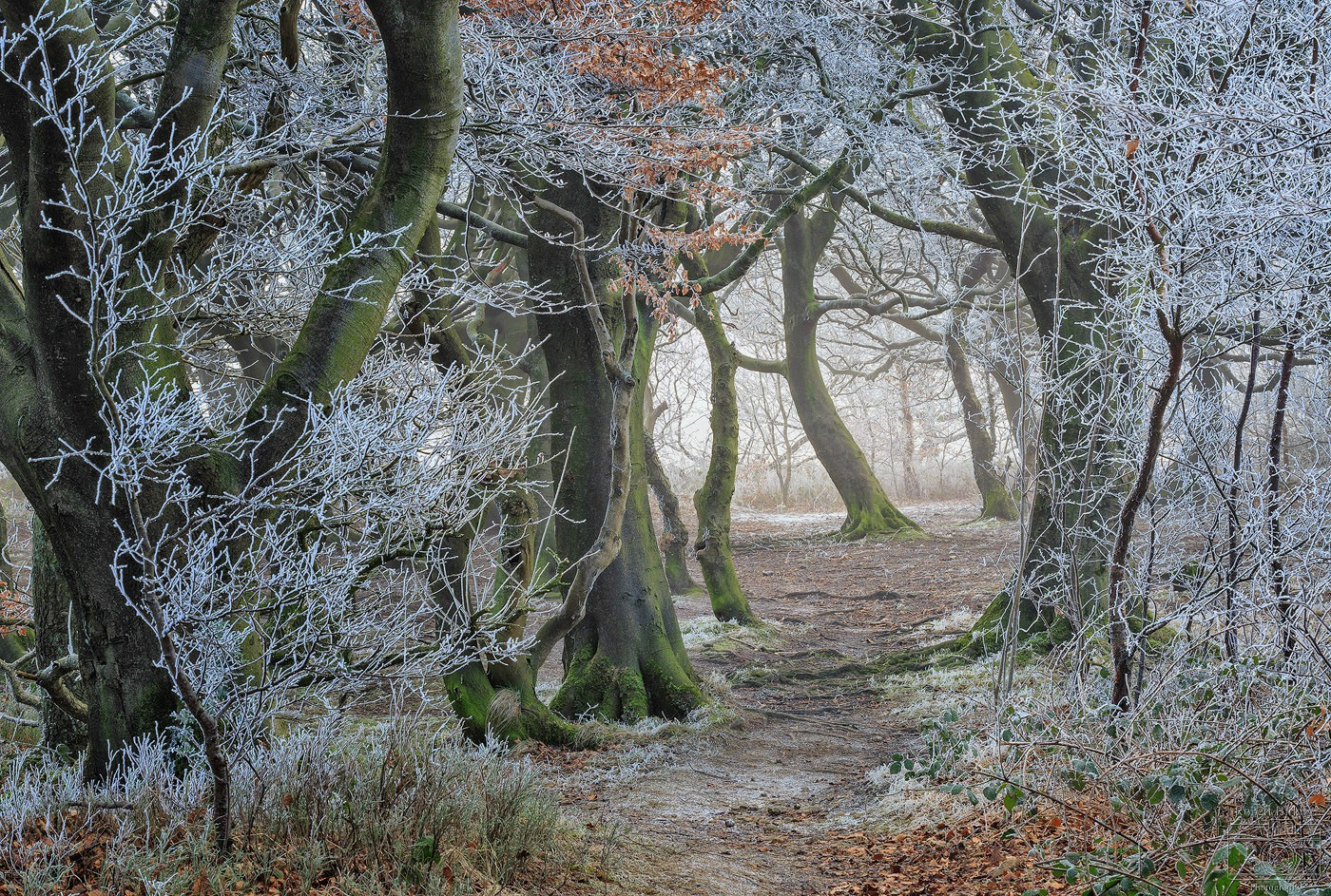 Painted White - Calderdale Landscapes