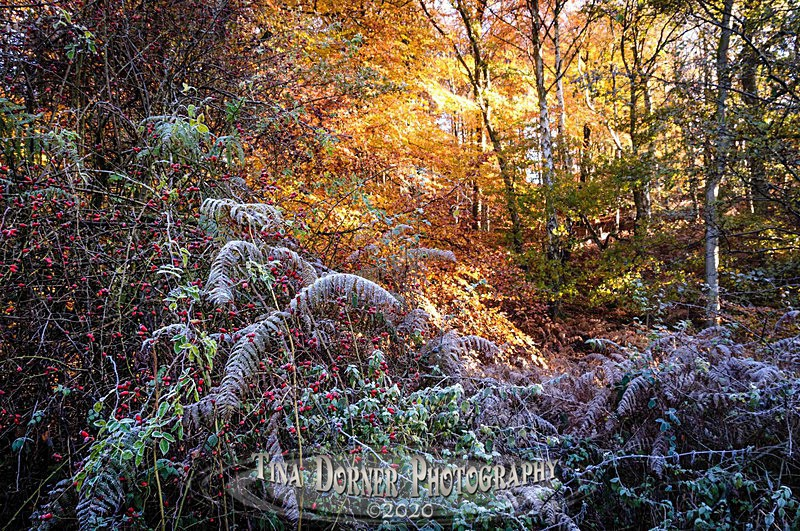 Autumn Forest of Dean. Tina Dorner Photography