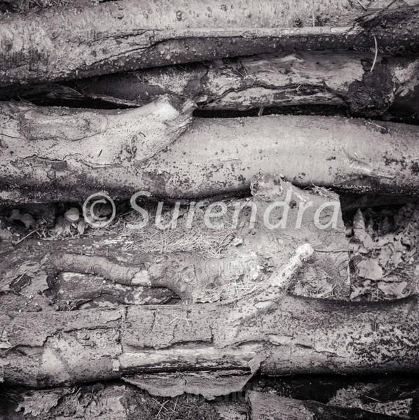 Bark # 9D - Bark Series 1 樹皮