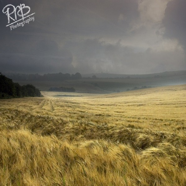 Field Of Gold - Wiltshire & West Country Landscapes
