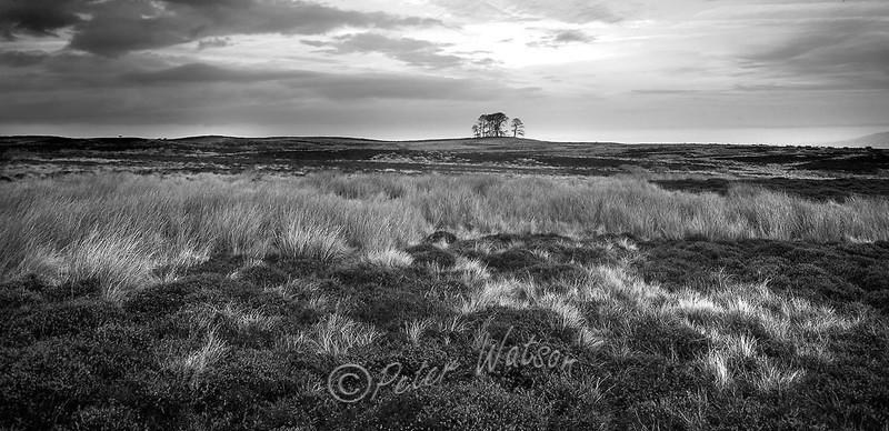 Yorkshire Moors England - Monochrome