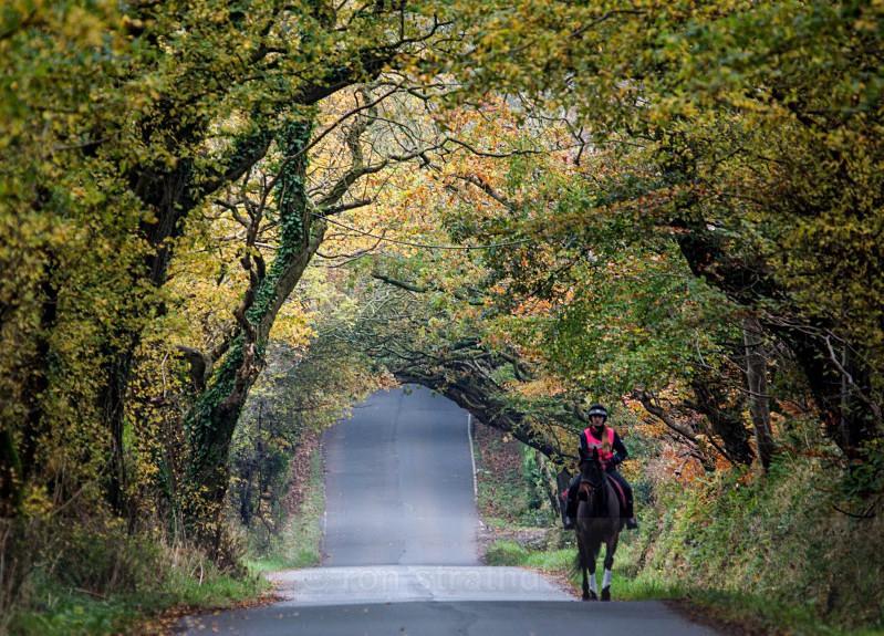Autumn leaves tunnel - Life on Man
