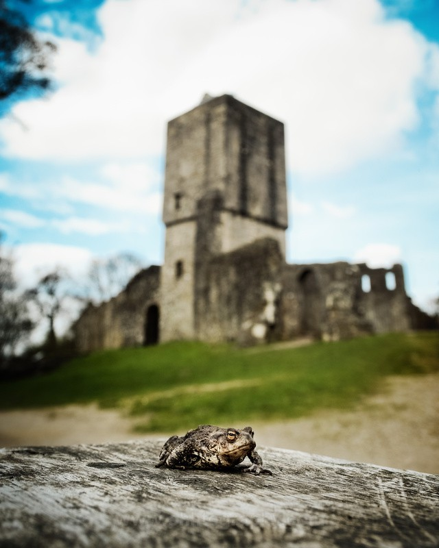 A frog and his castle. - The outdoors