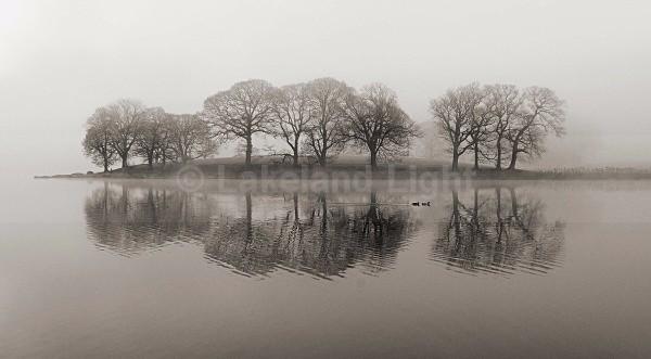 Esthwaite Trees bw - Monochrome