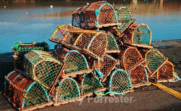 Lobster Baskets - Recent