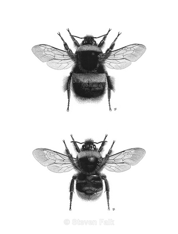 Bumblebee Combo - Bees