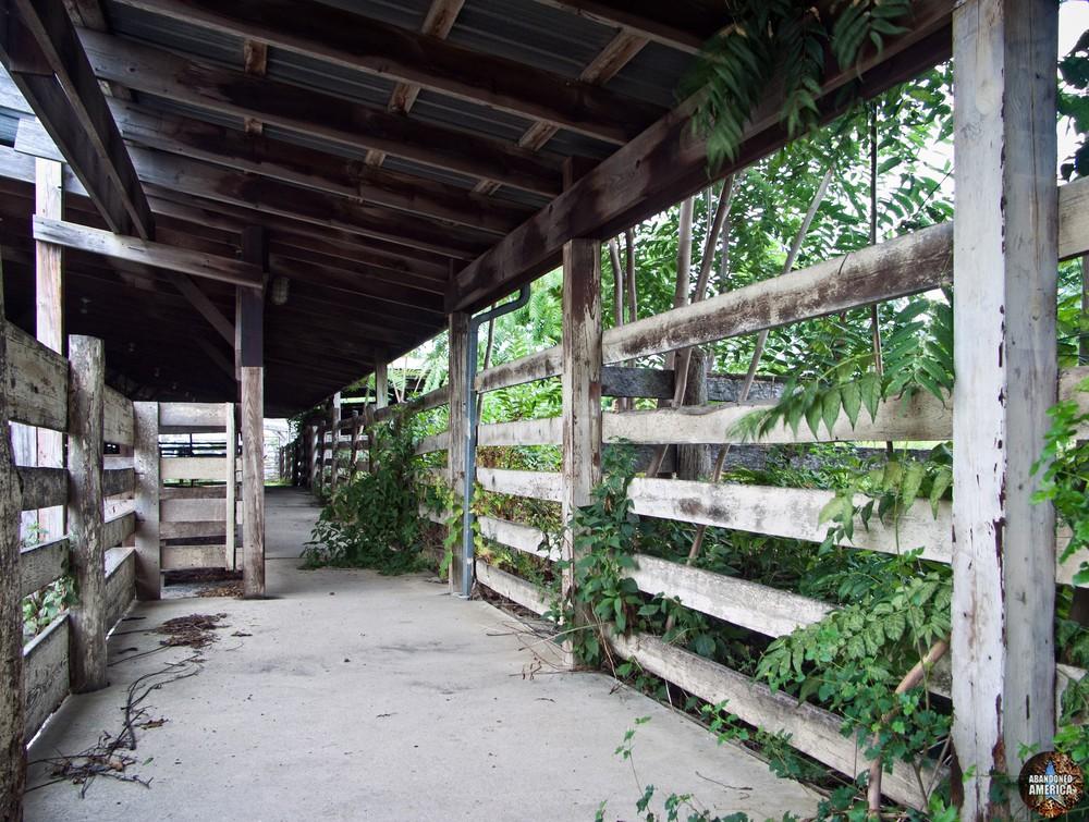 The Lancaster Stockyards   Livestock Alley - Lancaster Stockyard