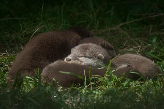 9 - Otters