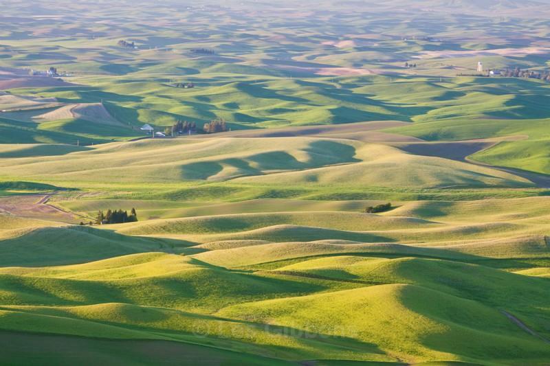 farm lands - Palouse