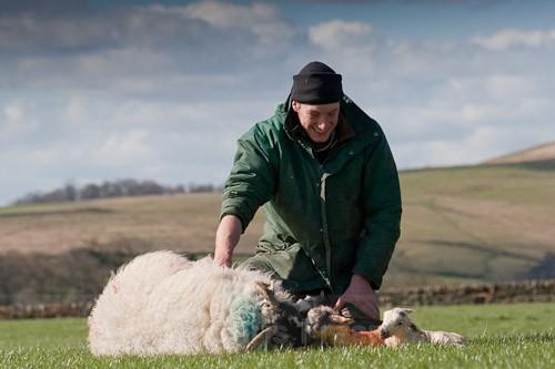 17 - The Lambing