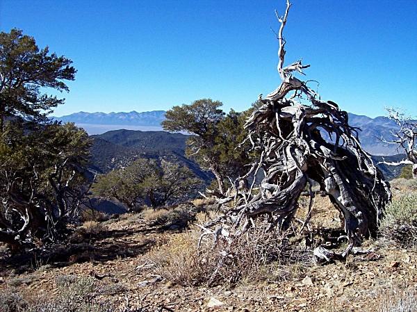 San Juan Mahogney - Nevada (mostly) Landscapes