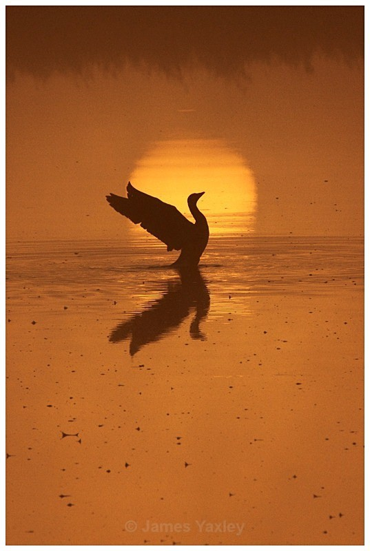 Greylag Sunrise - Creative