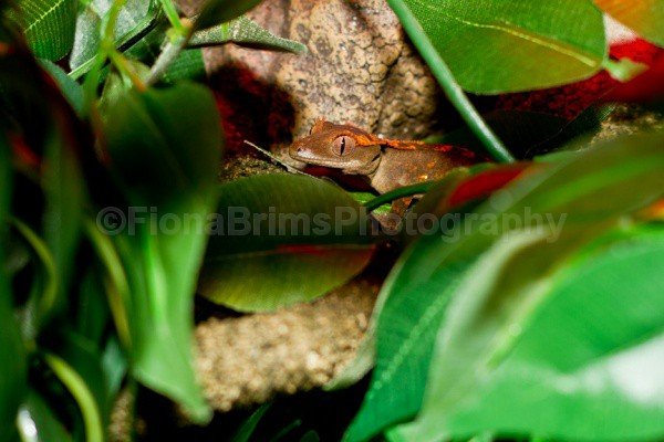 blob - Reptile Photography