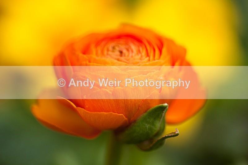 20120406-_MG_9450 - Plants & Flowers