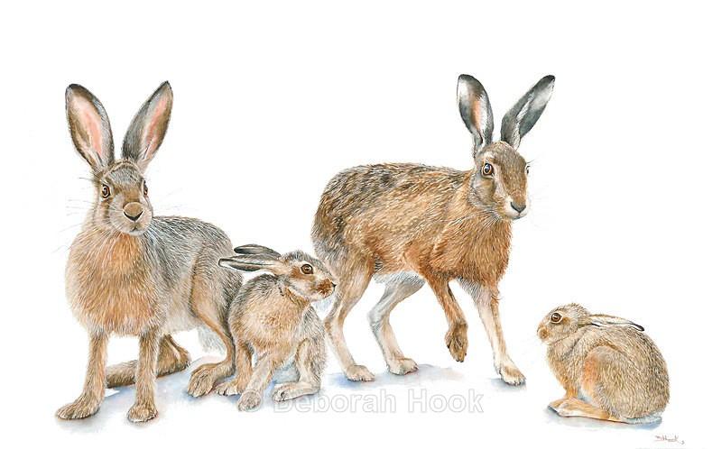 Hare today - British Wildlife