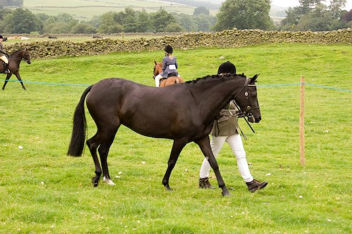 62 - Moniaive Horse Show 2008
