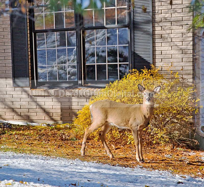 Urban Buck - Winterscape