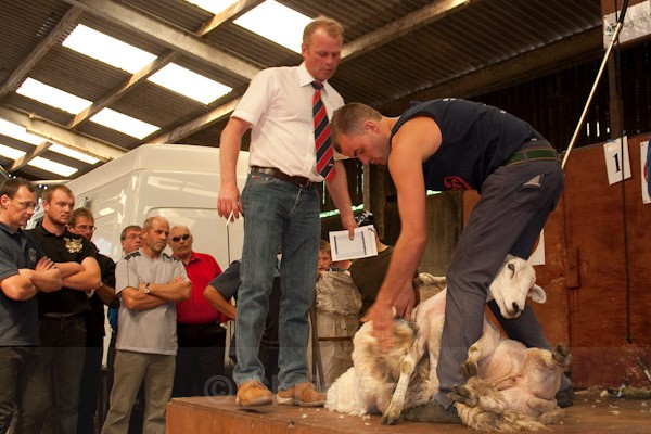 28 - Shearing Competition